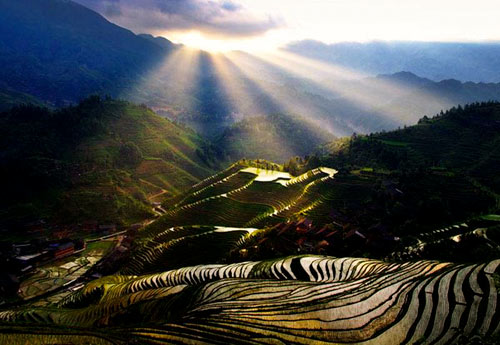 riziere longji